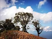 Postulan arboles seculares del parque Con Dao para reconocimiento del patrimonio nacional
