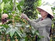 Sector agrícola de Vietnam planea nuevas metas para 2018