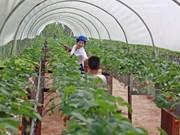 Vietnam estimula inversión en agricultura de alta tecnología