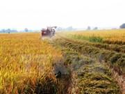 Localidades de Vietnam y Japón fomentan cooperación en agricultura de alta tecnología