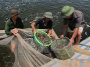 Provincia centrovietnamita presta gran atención a desarrollo acuícola