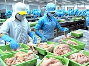 Publican Libro Blanco sobre lucha contra pesca ilegal en Vietnam