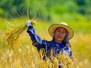 China se compromete a impulsar importación de caucho y arroz de Tailandia