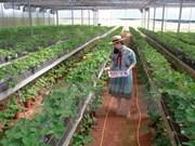 Vietnam impulsa desarrollo de cooperativas agrícolas de alta tecnología