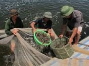 Premier de Vietnam exhorta a impulsar industria del camarón en Bac Lieu