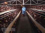 Vietnam refuerza medidas preventivas por gripe aviar