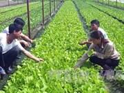 Vietnam por promover uso eficiente de fertilizantes orgánicos