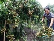 Hanoi y Hung Yen cooperan en suministro de productos agrícolas de calidad