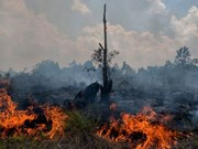 Indonesia declara emergencia tras incendio forestal