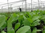 Registran en Vietnam más de 700 cadenas de suministro de productos seguros