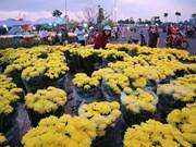 Vietnam destina millones de dólares para importación de flores para el Tet