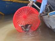 Liberan en Hanoi peces en motivo del Año Nuevo Lunar