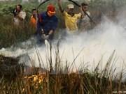 Trabajan por recuperar 140 mil hectáreas de turbera en provincia de Indonesia