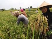 Indonesia busca fortalacer lucha contra la pobreza