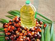Producción de aceite de palma de Malasia aumentará en 2018