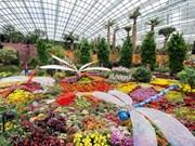 Singapur exhibe macetero floral más grande del orbe