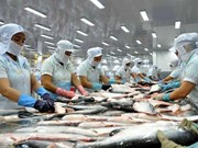 Estados Unidos aplica impuestos antidumping a pescados Tra importados de Vietnam