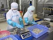 Comisión Europea lista para apoyar a Vietnam en lucha contra la pesca INDNR