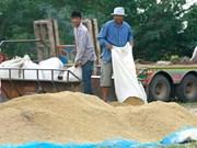 Exportaciones de arroz tailandés prevén que se reduzcan en 2018