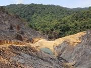 Vietnam: cobertura forestal alcanza más de 41 por ciento