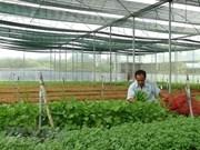 Exportación hortofrutícola de Vietnam alcanza 934 millones de dólares
