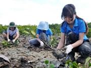 Vietnam impulsa el desarrollo de cooperativas de silvicultura