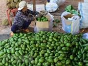 Localidades altiplánicas de Vietnam impulsan la siembra de frutas