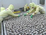Vietnam por mantener desarrollo estable de acuicultura