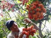 Vietnam exportará rambután a Nueva Zelanda