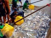 Empresas vietnamitas enfrentan dificultades al exportar productos acuáticos a la UE