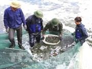 Provincia vietnamita actúa contra la pesca ilegal como respuesta a advertencia de la UE