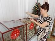 Vietnam tiene grandes potenciales para exportación de nidos de salanganas, según expertos