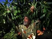 Vietnam busca aumentar con México el intercambio de productos agroalimentarios