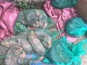 Detectan tráfico ilegal de animales salvajes en provincia vietnamita de Binh Duong