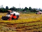 Tendencia creciente de exportaciones de arroz de alta calidad en Vietnam