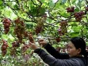 Vietnam por impulsar el agroturismo