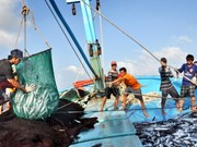 Barcos pesqueros de Vietnam laboran apegados a la ley desde principios de año