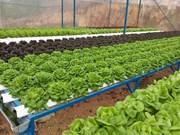 Ciudad Ho Chi Minh registra fructífero desarrollo de agricultura de alta tecnología