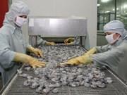 Vietnam apuesta por el desarrollo sostenible de la camaronicultura