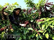 Empresas de Vietnam impulsan exportaciones a China mediante ferias comerciales