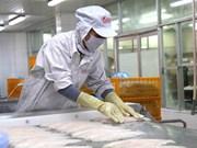 Exportaciones del pescado Tra vietnamita a China registran abrupto aumento