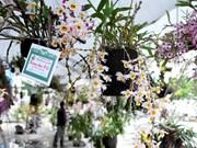 Hanoi amplía cultivos de flores y plantas ornamentales