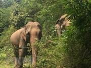Destacan en Vietnam importancia de conservación de la biodiversidad