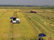 Jóvenes vietnamitas invierten en agricultura limpia