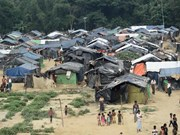 Decenas de refugiados rohingyas aspiran a regresar a Myanmar
