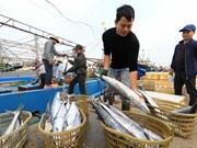 Vietnam aumenta producción pesquera en primeros cinco meses de este año