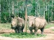 Lanzan en Vietnam concurso de cortometrajes sobre comercio ilegal de animales silvestres