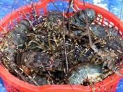 VASEP insta al gobierno a proteger el camarón de Vietnam