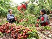 Sector agrícola de Vietnam alcanzará en primer semestre mayor crecimiento en 10 años