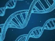 Debaten en Vietnam sobre aplicación de decodificación de genes en tratamiento de cáncer